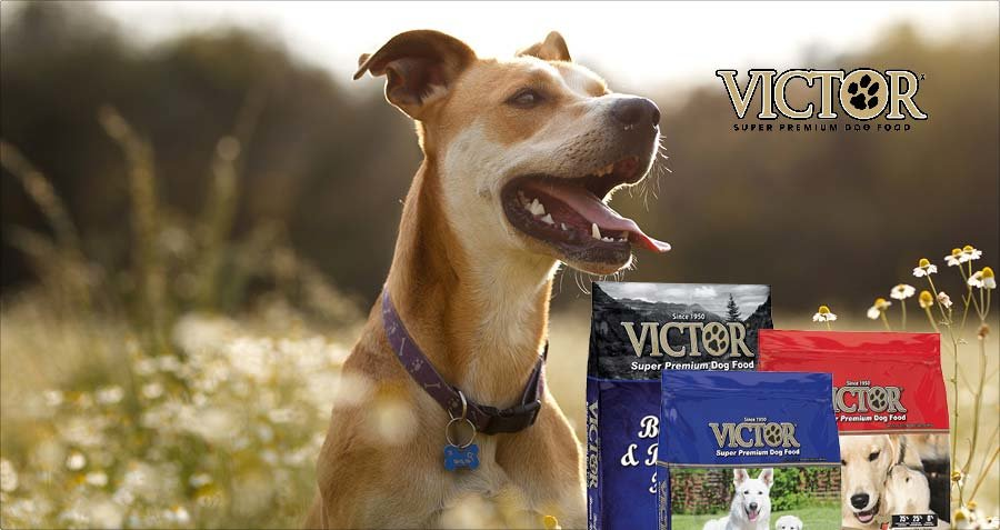 Victor logo with dog in field